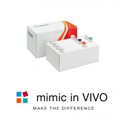 CONmiR mimic in vivo