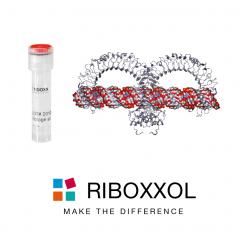 RIBOXXOL