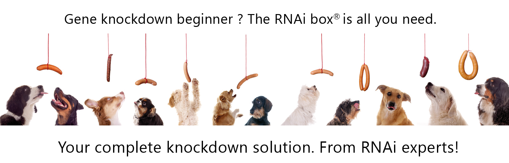gene knockdown beginner: the rnai-box is all you need. your complete knockdown solution.