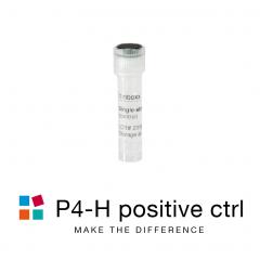 iBONi siRNA positive control-P4H