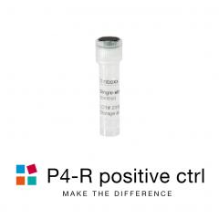 iBONi siRNA positive control-P4R