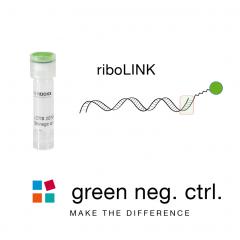 riboLINK miRNA green negative control