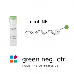 riboLINK siRNA green negative control