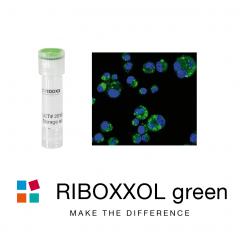 RIBOXXOL green488