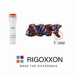 RIGOXXON