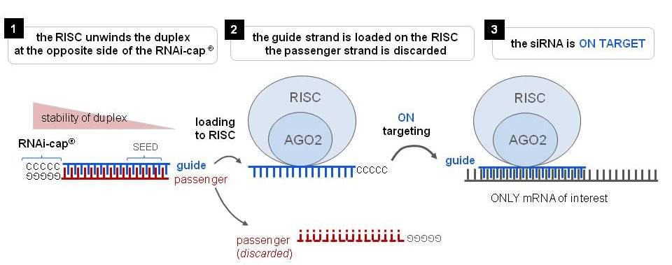 gene silencing by rna interference technology and application